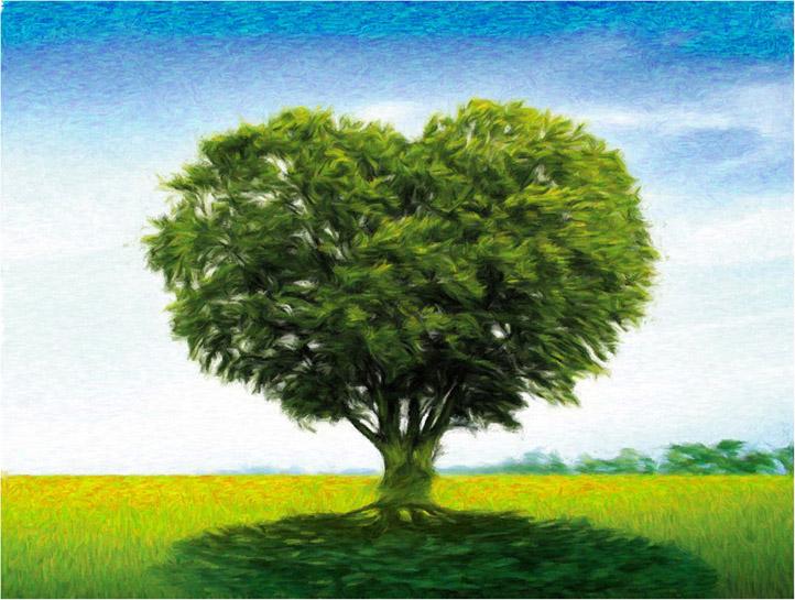 Невероятное и красивое дерево - картинки и изображения 20