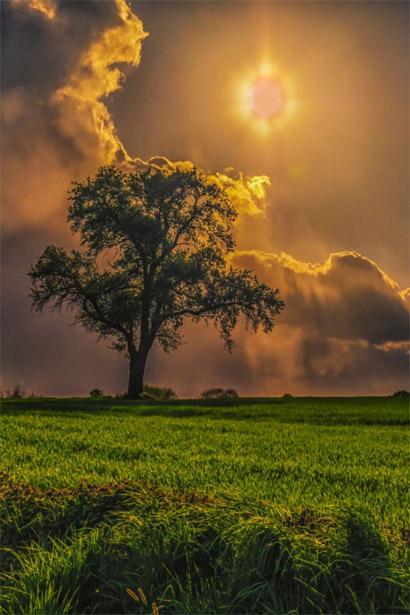 Невероятное и красивое дерево - картинки и изображения 4