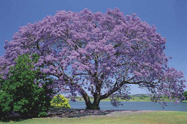 Невероятное и красивое дерево - картинки и изображения 6