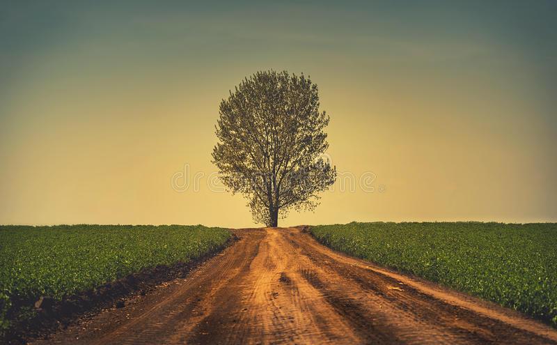Невероятное и красивое дерево - картинки и изображения 8