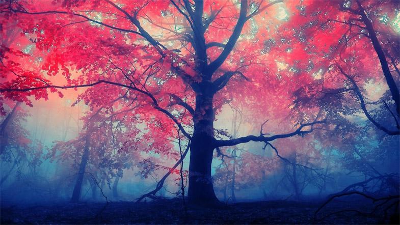 Невероятное и красивое дерево - картинки и изображения 9