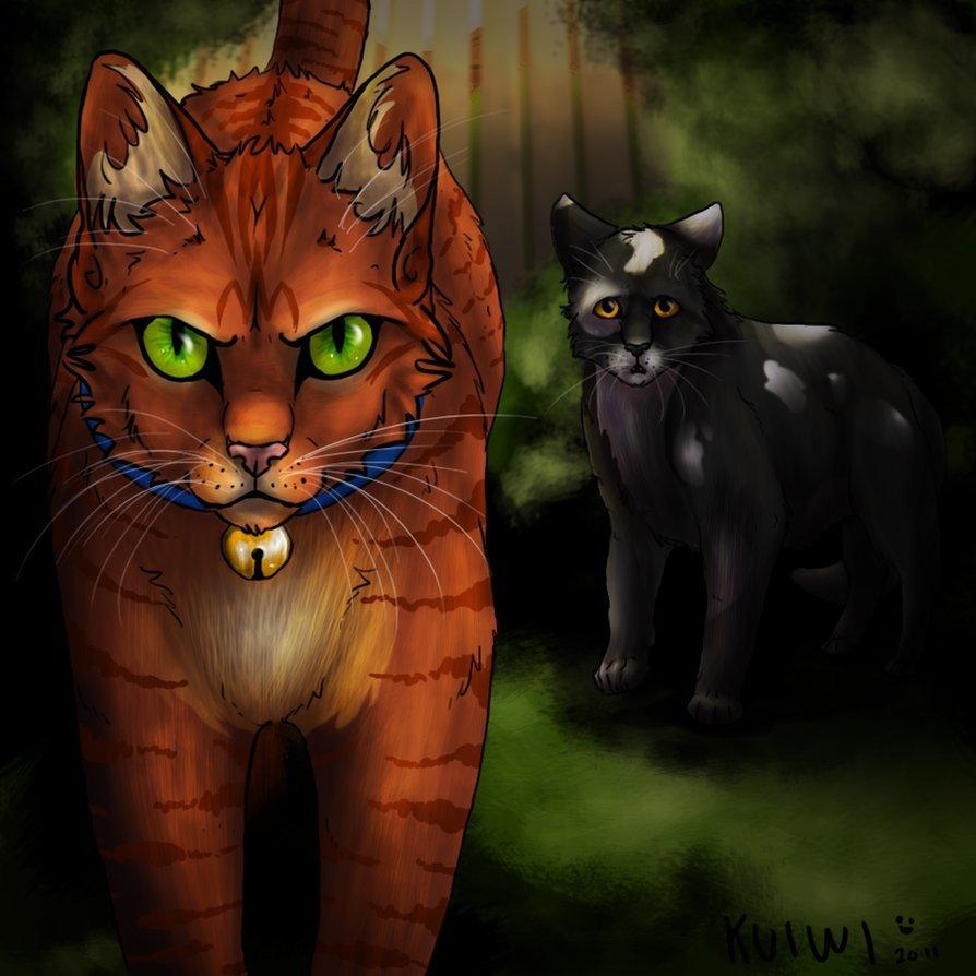Необычные и красивые картинки Коты Воители - подборка 20 штук 14