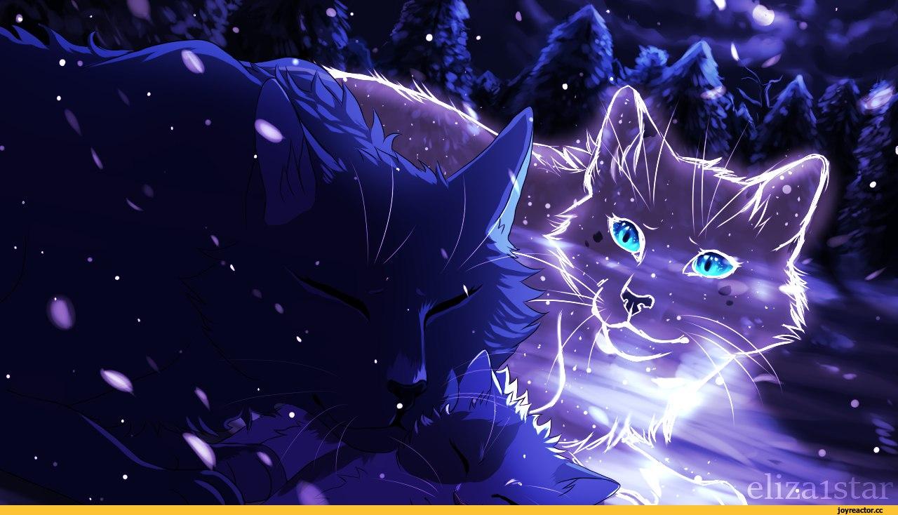 Необычные и красивые картинки Коты Воители - подборка 20 штук 16
