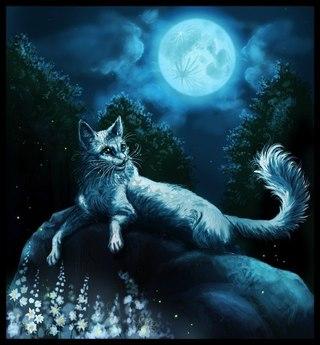 Необычные и красивые картинки Коты Воители - подборка 20 штук 6