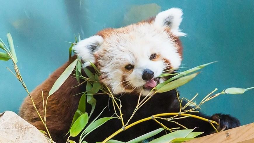 Панды очень красивые и прикольные картинки, арты, фото - подборка 5