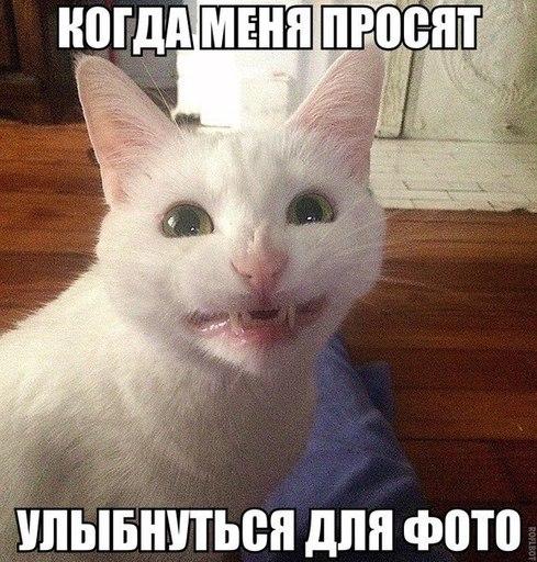 Прикольные и смешные картинки улыбки - забавная подборка 13