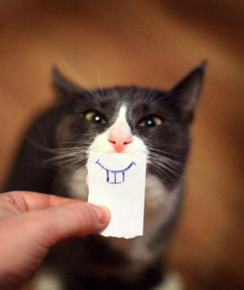 Прикольные и смешные картинки улыбки - забавная подборка 8