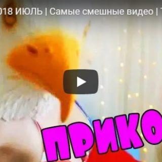 Самые смешные видео ролики недели - топовая подборка №141