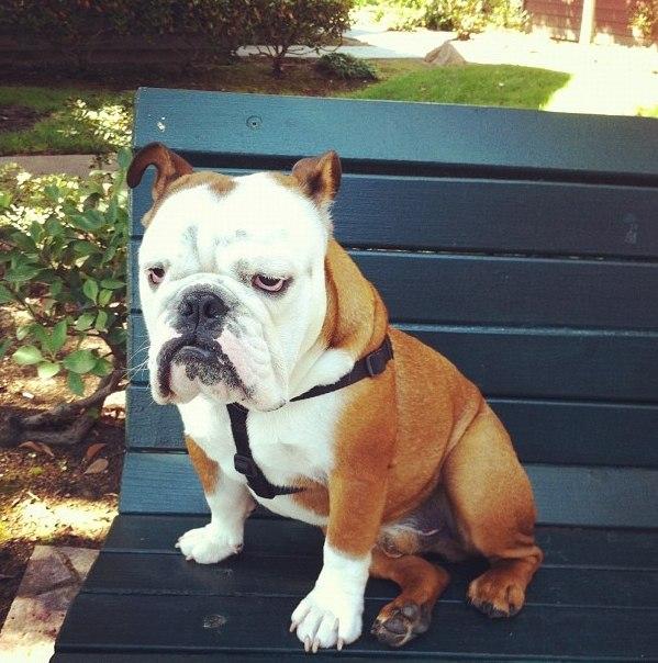 Смешные и прикольные фотки собак, щенков - забавная коллекция 1
