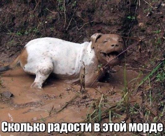 Смешные и прикольные фотки собак, щенков - забавная коллекция 7