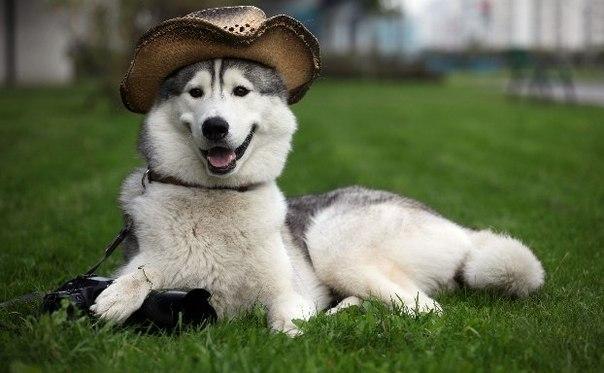 Смешные и прикольные фотки собак, щенков - забавная коллекция 8