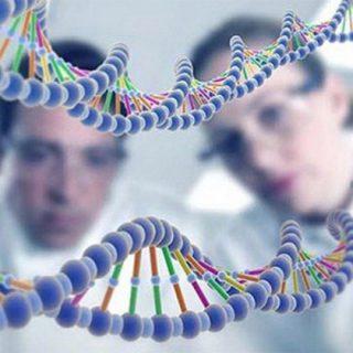 Что такое наследственность Какие биологические признаки наследует человек 1