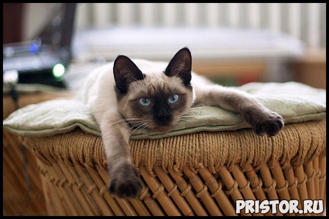 Как определить, когда кошка родит - основные признаки, подготовка 2