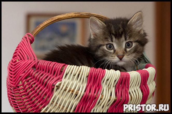 Как определить, когда кошка родит - основные признаки, подготовка 3