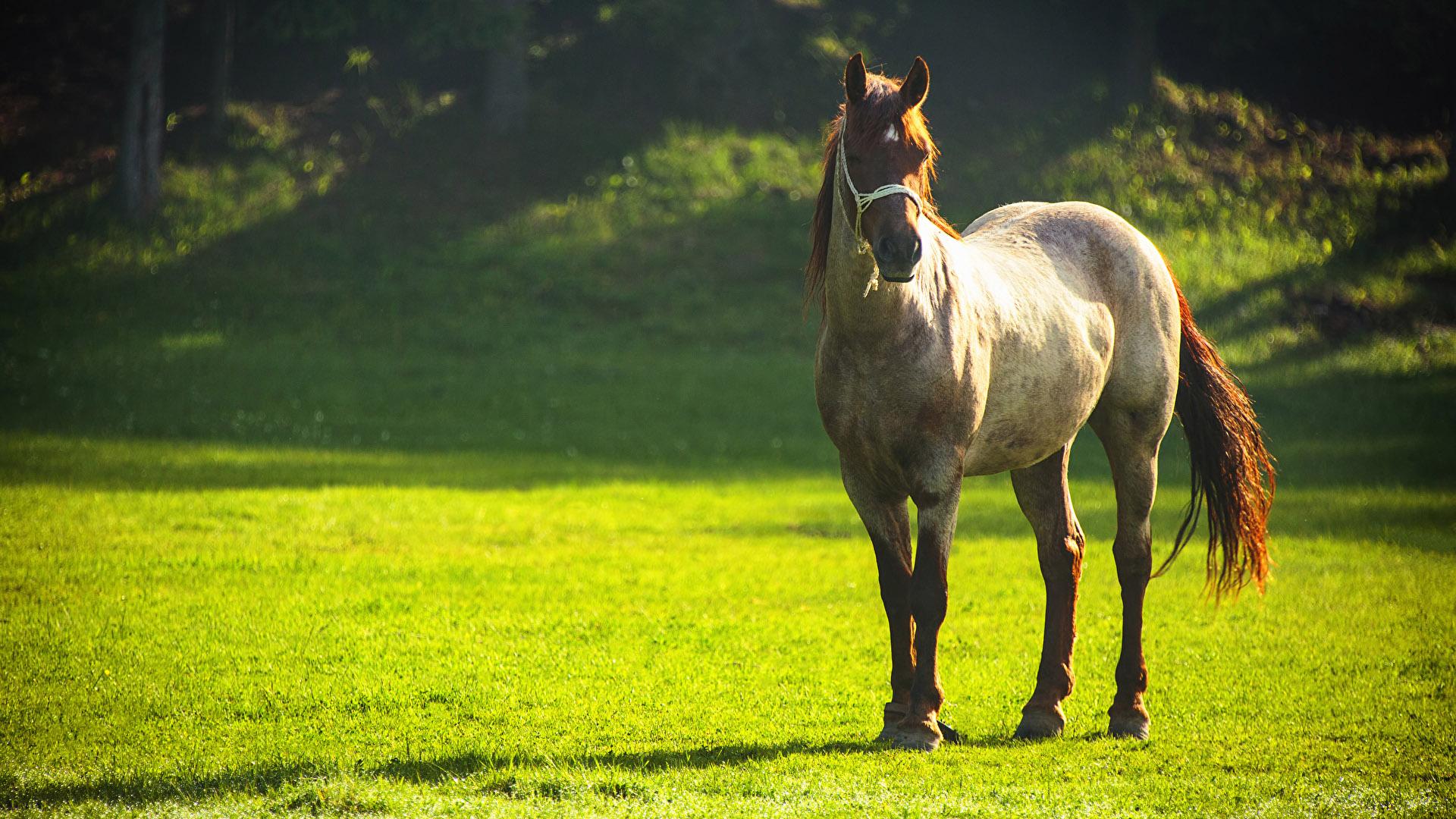 Картинки на рабочий стол лошади - красивые и удивительные 10