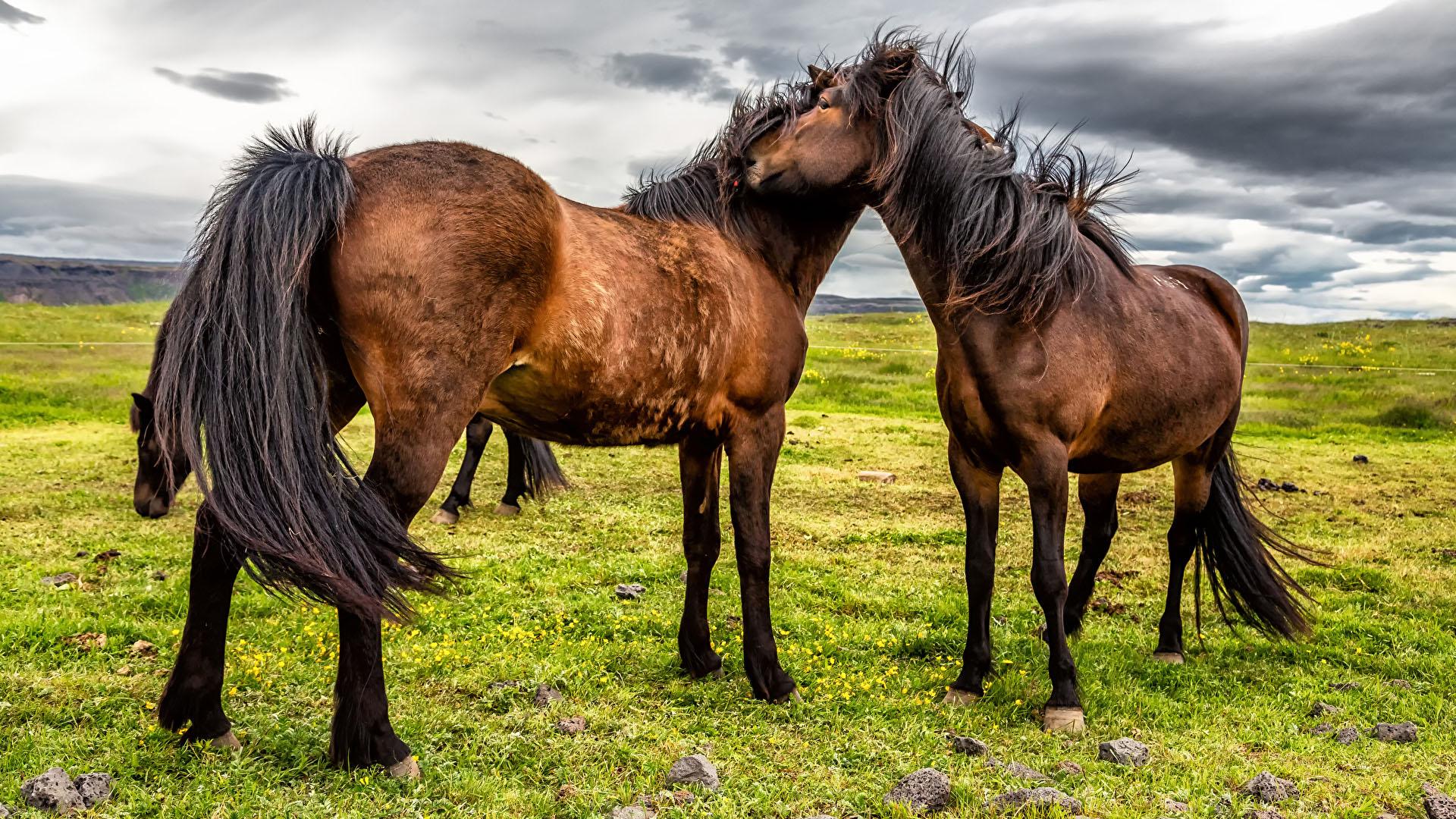 Картинки на рабочий стол лошади - красивые и удивительные 11