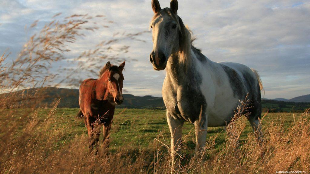 Картинки на рабочий стол лошади - красивые и удивительные 13