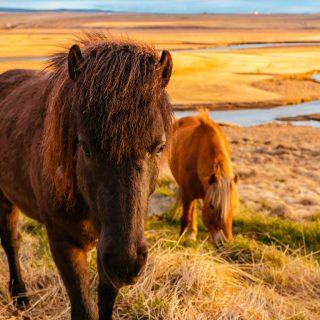 Картинки на рабочий стол лошади - красивые и удивительные 14