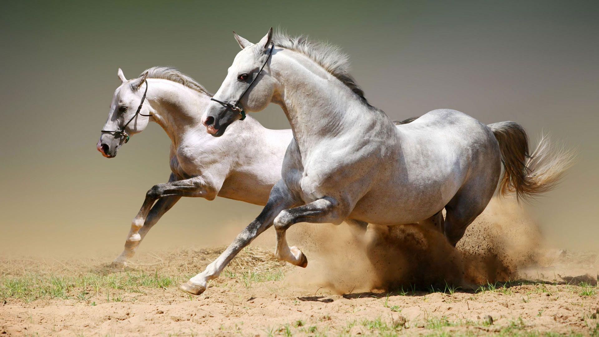 Картинки на рабочий стол лошади - красивые и удивительные 17