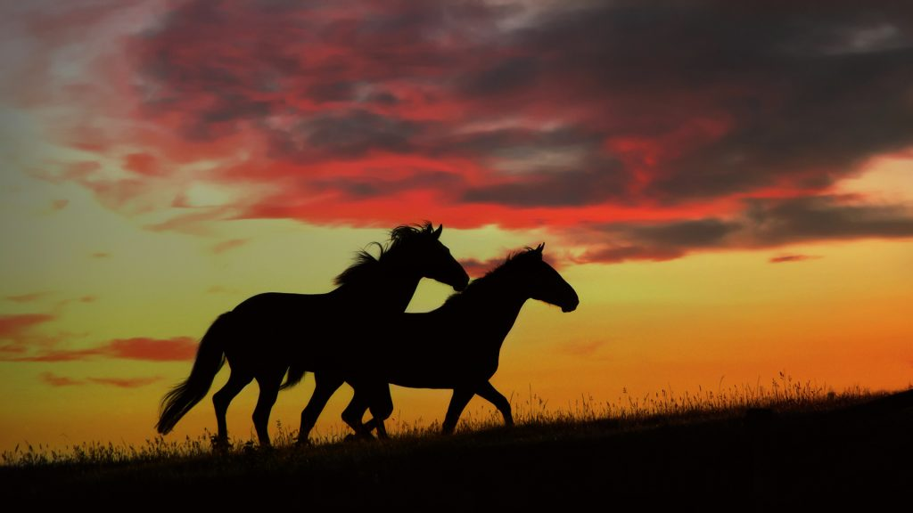 Картинки на рабочий стол лошади - красивые и удивительные 18