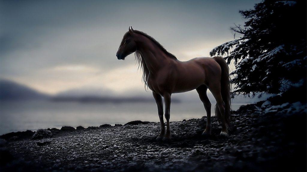 Картинки на рабочий стол лошади - красивые и удивительные 3