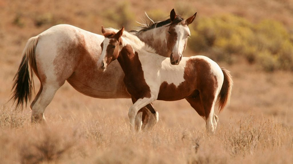 Картинки на рабочий стол лошади - красивые и удивительные 4