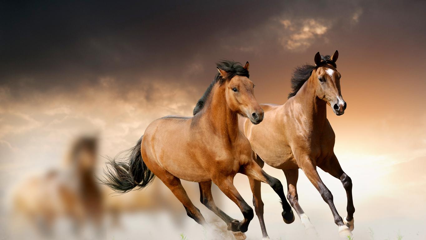 Картинки на рабочий стол лошади - красивые и удивительные 5