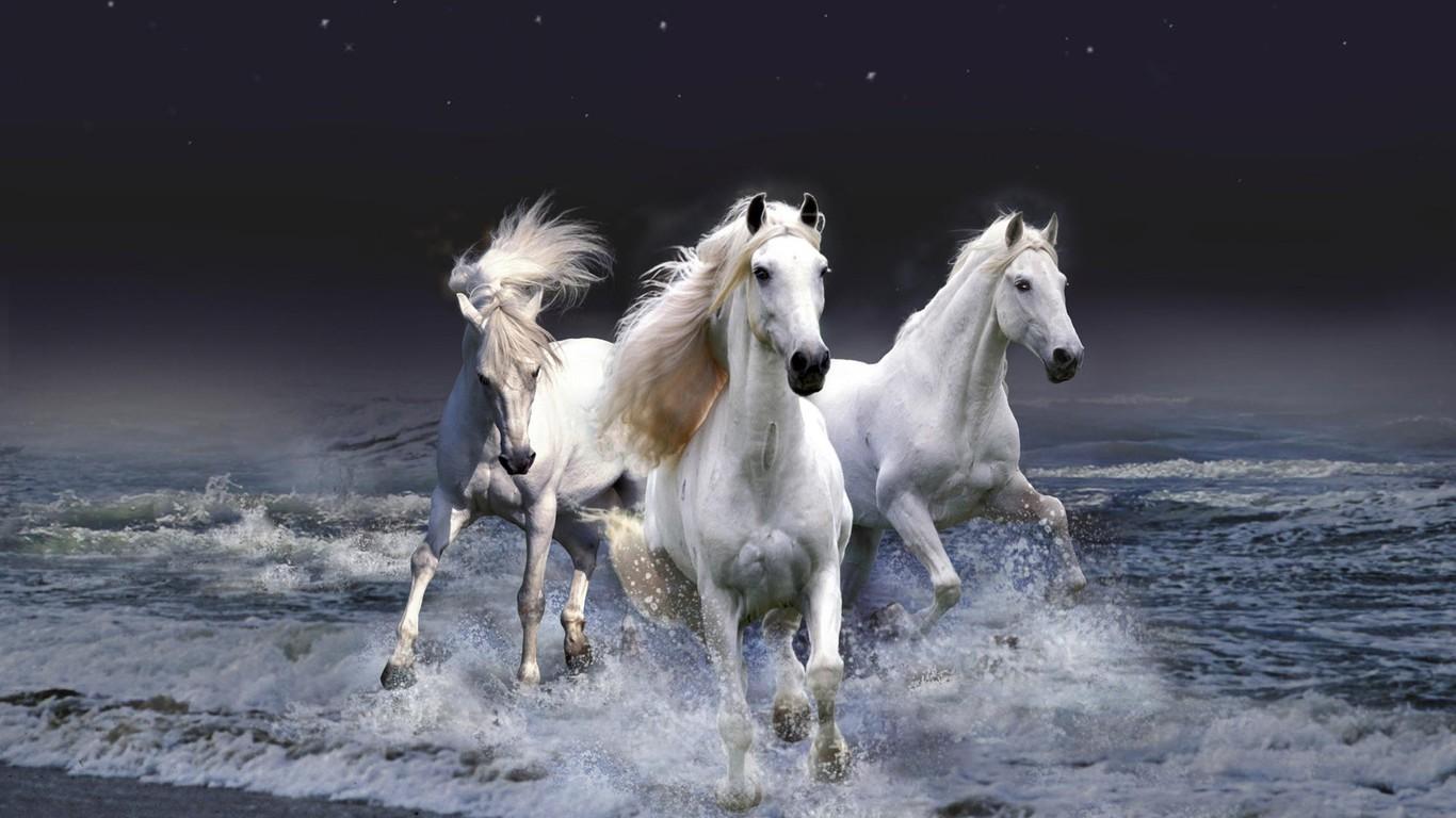 Картинки на рабочий стол лошади - красивые и удивительные 9
