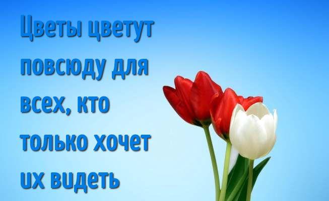 Красивые высказывания и цитаты про цветы со смыслом - подборка 6