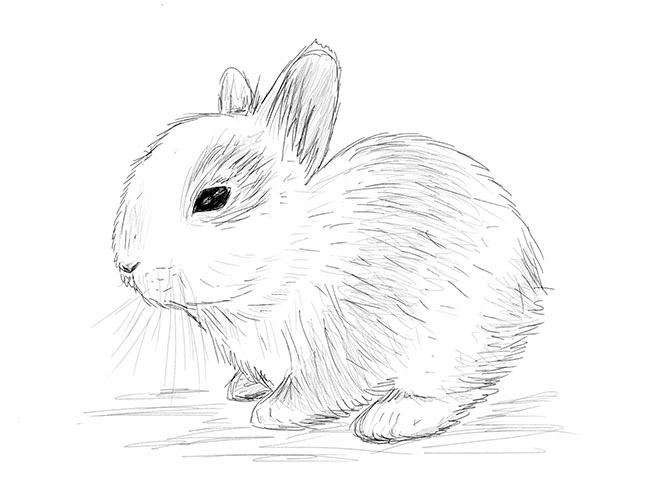 Красивые и простые рисунки, картинки кроликов для срисовки - сборка 15