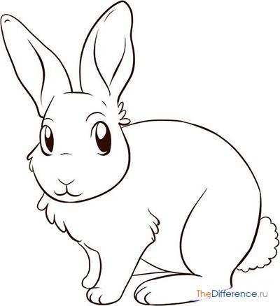 Красивые и простые рисунки, картинки кроликов для срисовки - сборка 8