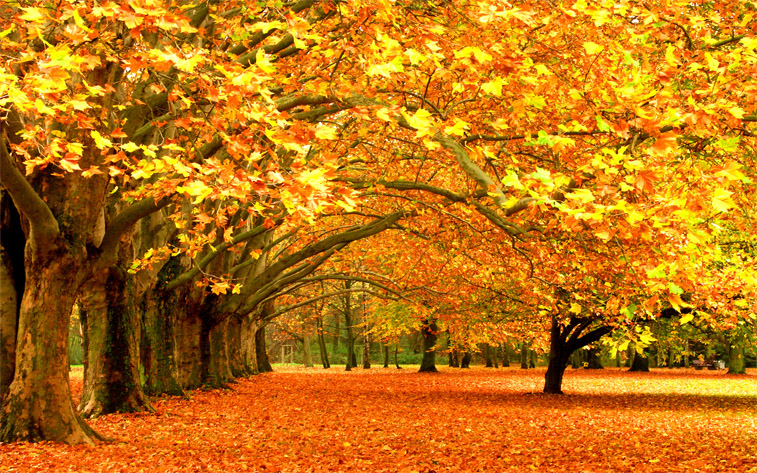 Красивые и удивительные картинки осень в парке - подборка фото 10