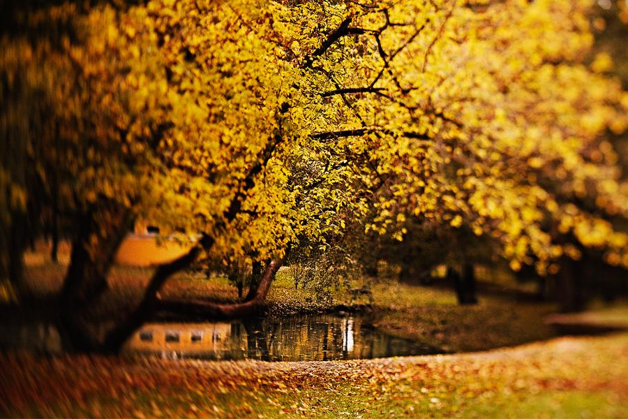 Красивые и удивительные картинки осень в парке - подборка фото 2