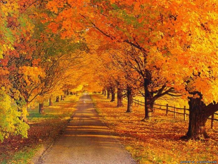 Красивые и удивительные картинки осень в парке - подборка фото 3