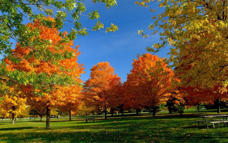 Красивые и удивительные картинки осень в парке - подборка фото 7
