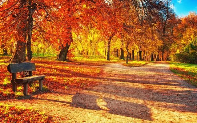 Красивые и удивительные картинки осень в парке - подборка фото 9