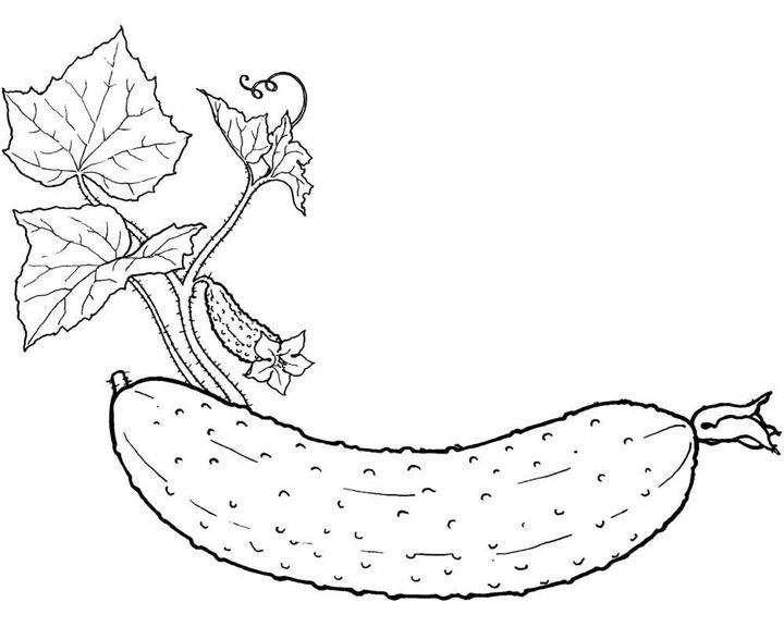 Красивые картинки для раскраски фрукты и овощи - подборка 11