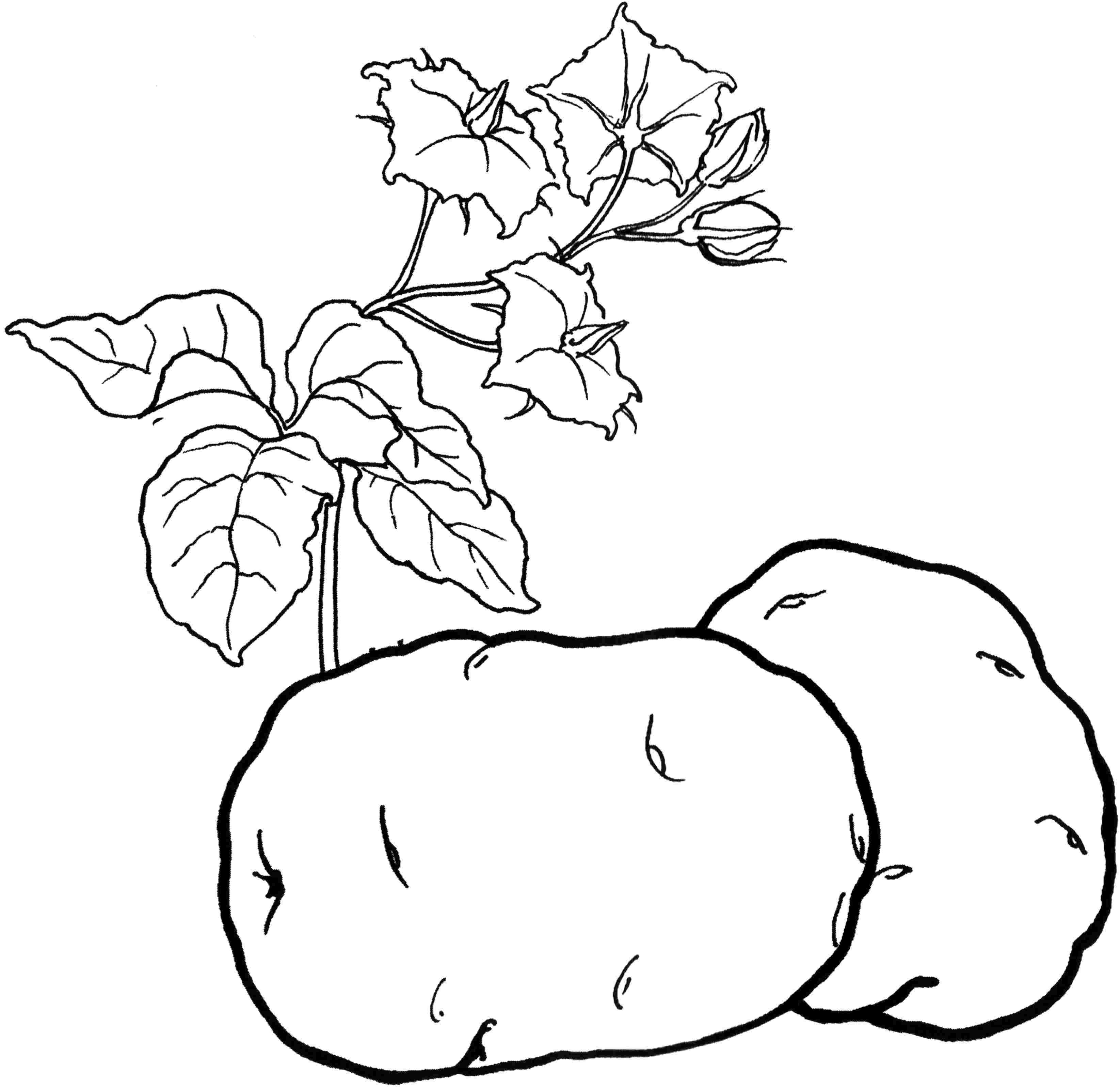 Красивые картинки для раскраски фрукты и овощи - подборка 5