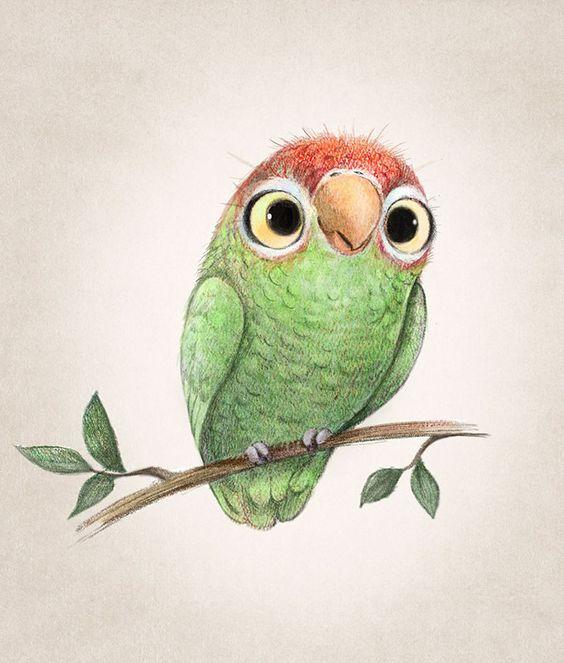 Красивые картинки и рисунки попугаев для срисовки для детей 9