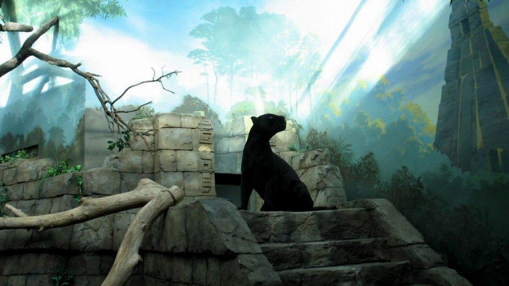 Красивые обои на рабочий стол Пантера - необычные фото животного 11