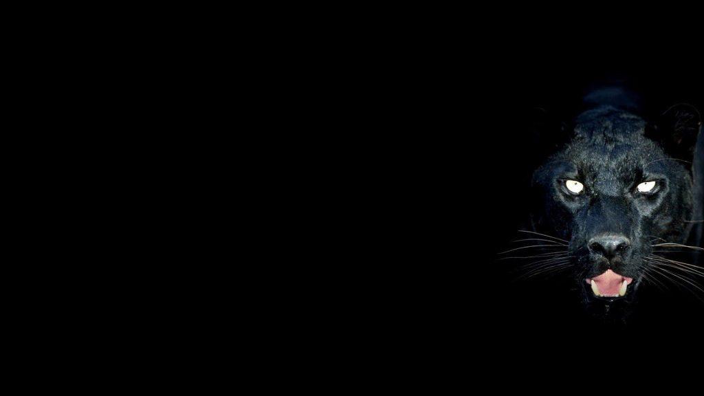 Красивые обои на рабочий стол Пантера - необычные фото животного 7