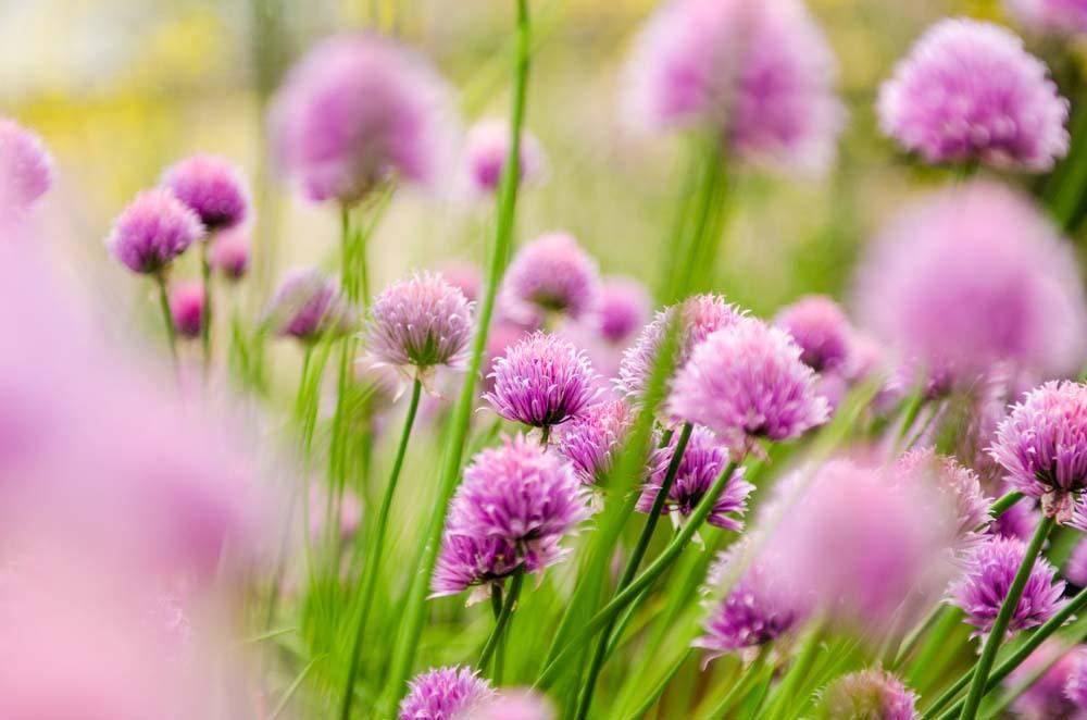 Красивые полевые цветы - удивительные картинки и фотографии 10