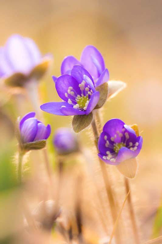 Красивые полевые цветы - удивительные картинки и фотографии 11
