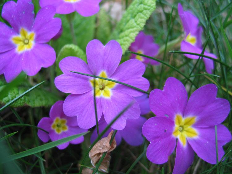 Красивые полевые цветы - удивительные картинки и фотографии 12
