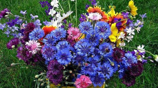 Красивые полевые цветы - удивительные картинки и фотографии 13