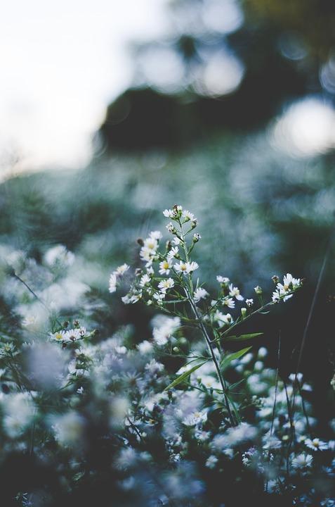Красивые полевые цветы - удивительные картинки и фотографии 15
