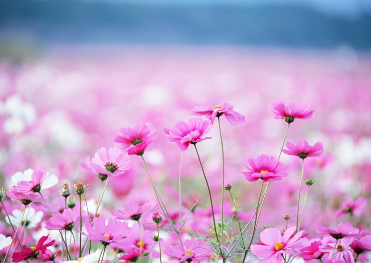 Красивые полевые цветы - удивительные картинки и фотографии 16