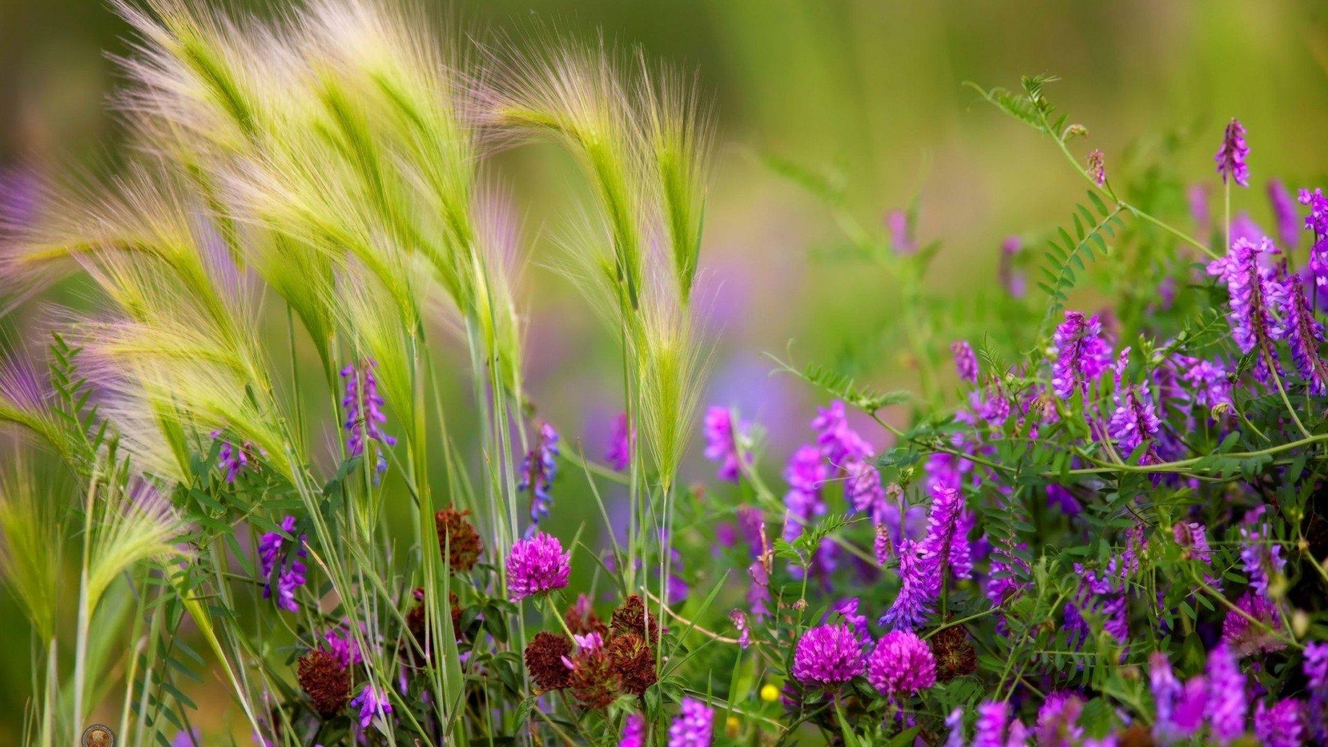 Красивые полевые цветы - удивительные картинки и фотографии 17