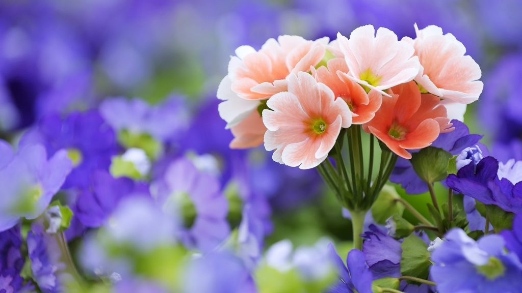 Красивые полевые цветы - удивительные картинки и фотографии 5