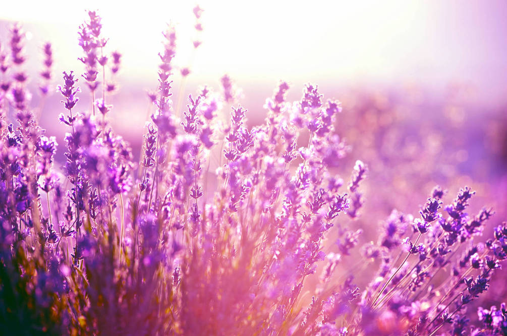 Красивые полевые цветы - удивительные картинки и фотографии 8